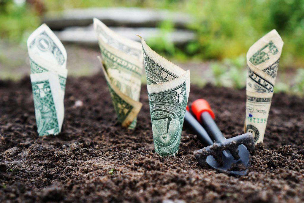 Kis ásóval elültetett dollárok. Hátha kikelnek...